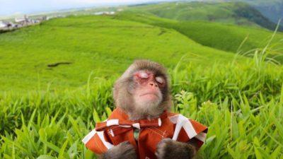 Merry-Go-Roundtable monkey